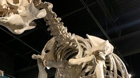 Paleontologists Dig Into a Giant Sloth Boneyard