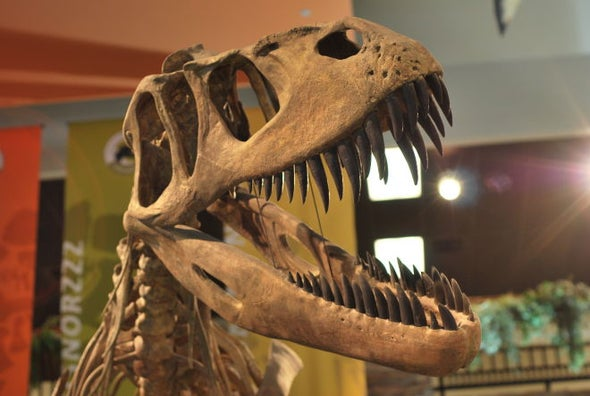 A Torvosaurus before Its Time