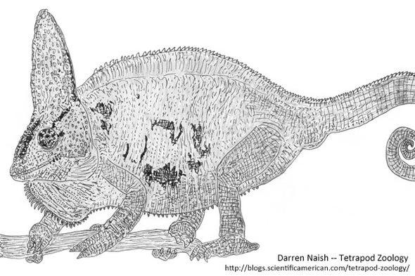 <i>Palleon,</i> <i>Archaius,</i> <i>Kinyongia,</i> <i>Nadzikambia</i>--The Last Chameleons, Part 3