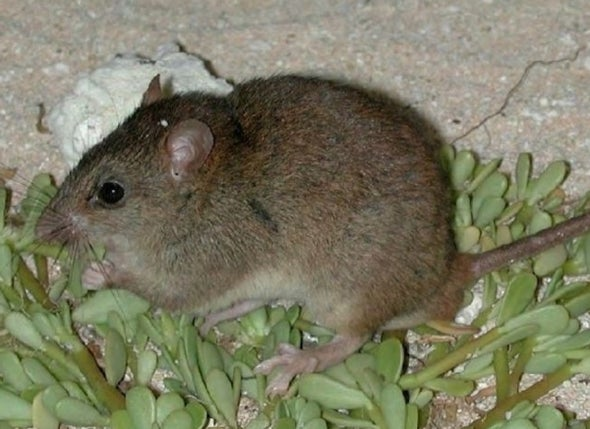Climate Change Has Claimed Its First Mammal Extinction