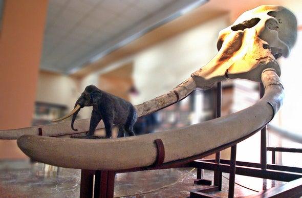 In Ancient Bones, an Elephant-Size Surprise