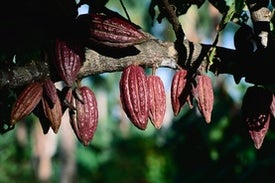 How Chocolate Can Help Save the Planet