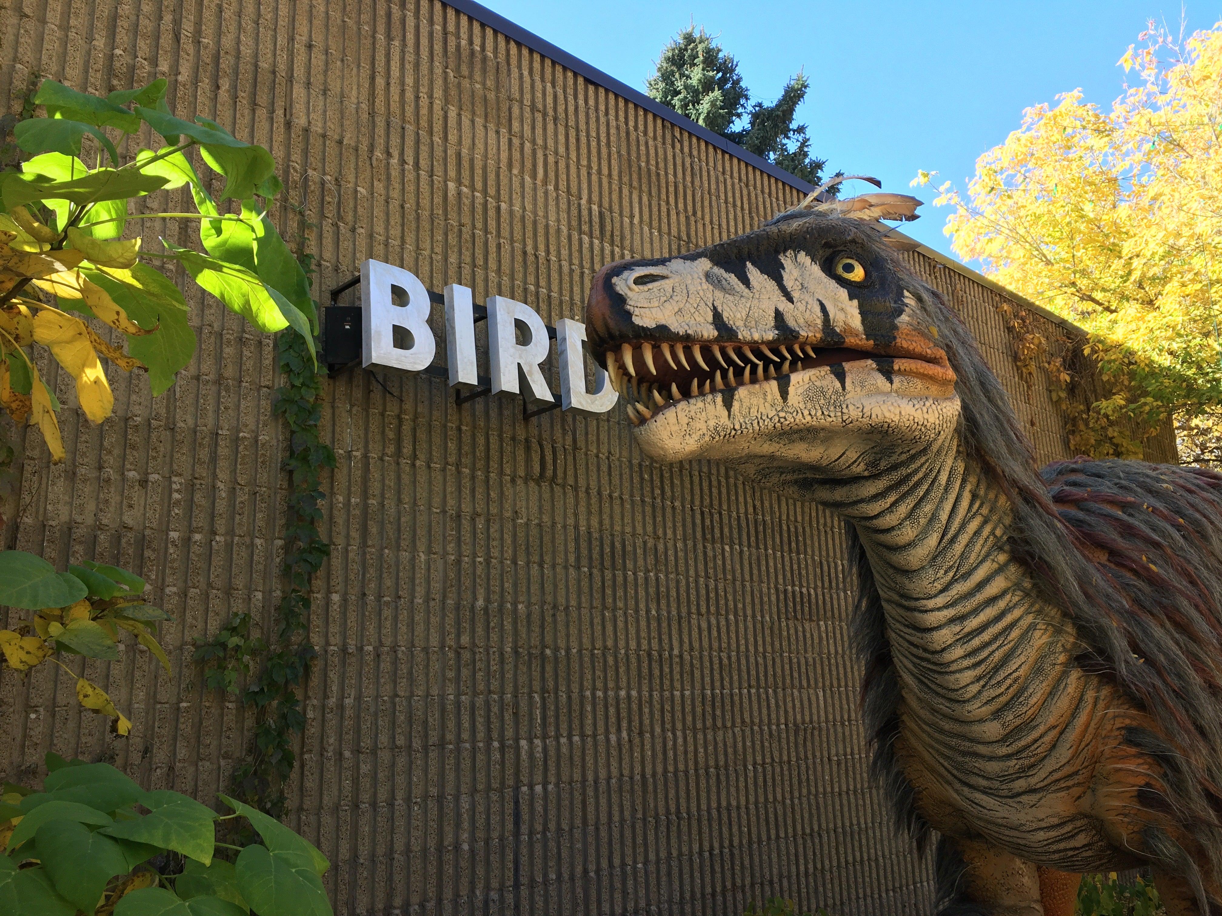 Some Dinosaurs Regurgitated Pellets Just Like Birds