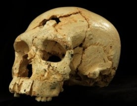 "Neandertal Lineage Began in a ""Game of Thrones"" World"