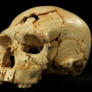 Neandertal Lineage Began in a
