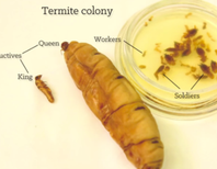 Long live the morbidly obese Termite Queen, and her terrifying army of sweat-licking babies