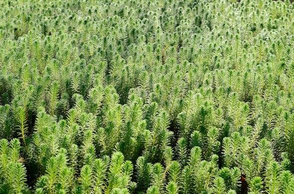 Using Herbicides to Save Endangered Snails