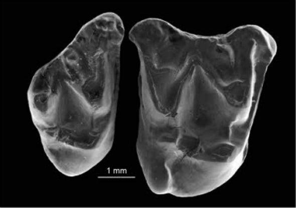Paleo Profile: Knight's Egyptian Bat