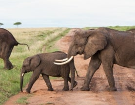 Elephants are Worth 76 Times More Alive Than Dead: Report