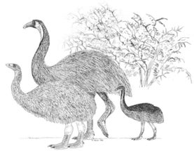 The 'ghosts' of extinct birds in modern ecosystems