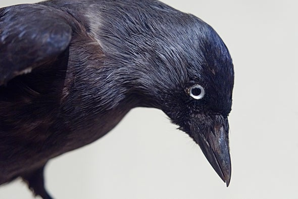 We Have Souls, and So Do Crows