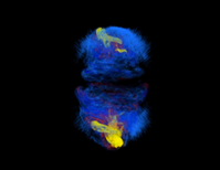 Strange Supernovae are Driven by Magnetic Fields [Video]