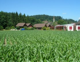 Small Farms and GMOs--Questions from a Reader