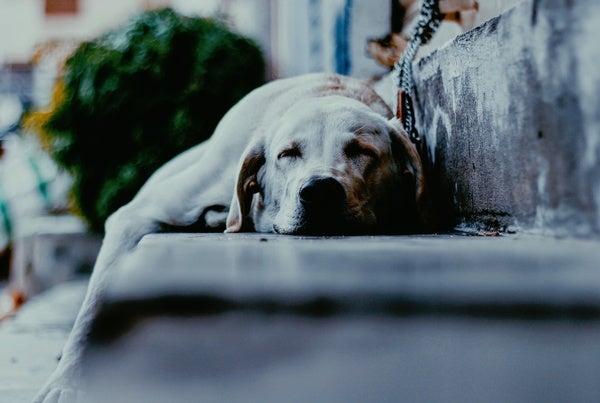 Memory Wins When Dogs Sleep