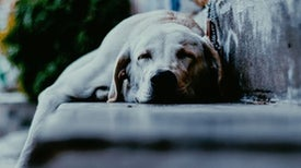 Memory Wins When Dogs Sleep