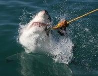 Film Fakery: Does Shark Week Harm Conservation Efforts?