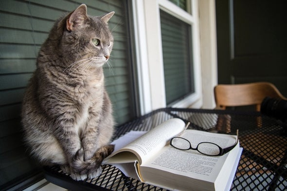The Best Books for Cat Lovers