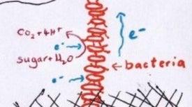 Bacteria that could pass as X-men: part 2