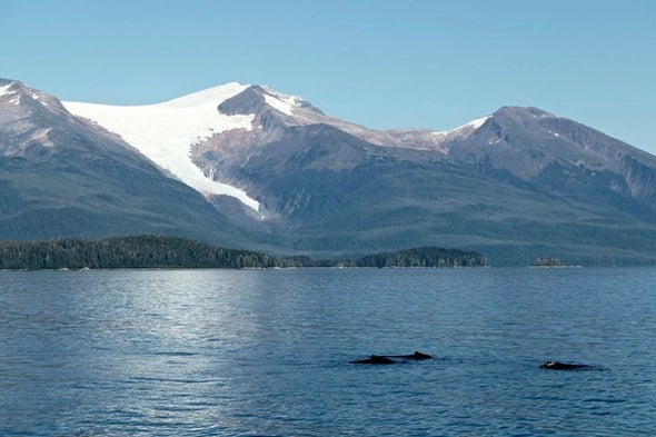 Iceless in Alaska