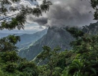 Seeing The Forest Through The Trees: How Wild Foods May Contribute To Food Security