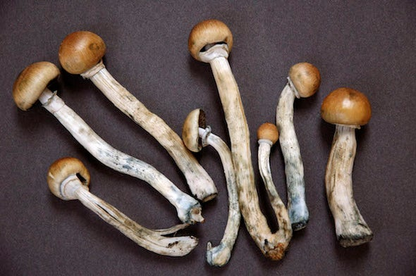 Setting the Record Straight on Medical Psilocybin