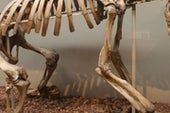 Want to Be a Fossil? Try Burial in Guano