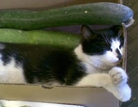Where to Fall on the Cats vs. Cucumbers Debate