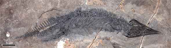 Sharp-Nosed Marine Reptile Is a Triassic Surprise