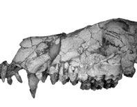 Paleo Profile: Egypt's Canine Beast