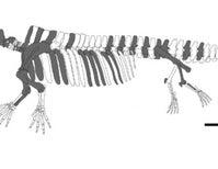 Paleo Profile: The Sobrarbe Siren