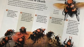 The Evolution of a <i>Scientific American</i> Graphic: Beetle Resurrection