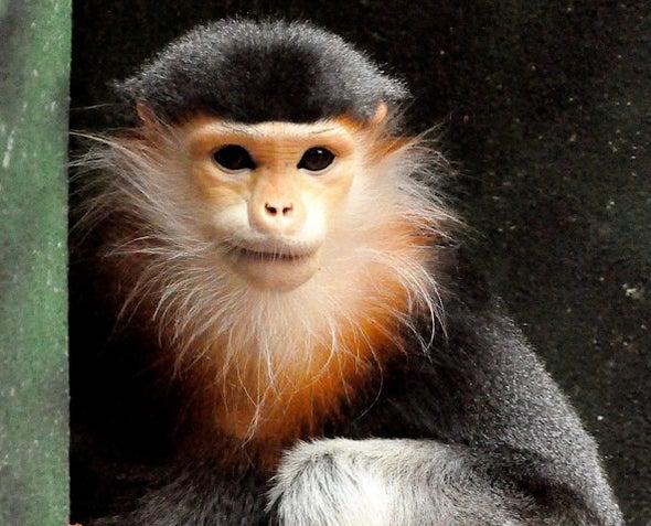 Swipe Right if You Love Endangered Monkeys