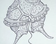 An ink dinoflagellate