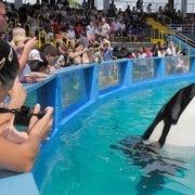 Free Lolita the Killer Whale!
