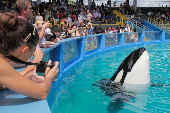 Free Lolita, the Killer Whale!