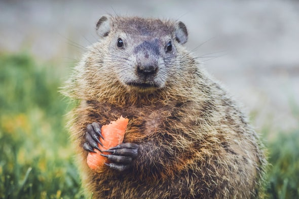 Groundhogs Don't Have a Clue