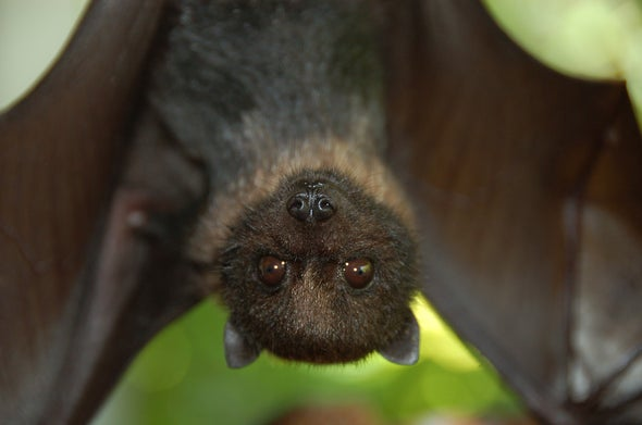 Are Bats Facing a Hidden Extinction Crisis?