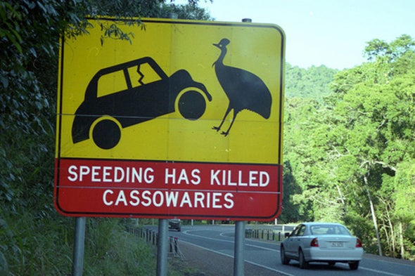 It's World Cassowary Day 2016