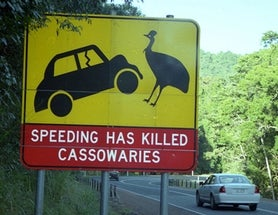 It's World Cassowary Day 2016