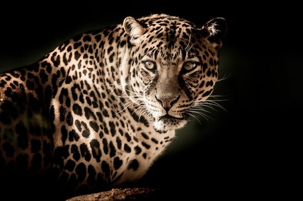 We Should Embrace Scavengers and Predators