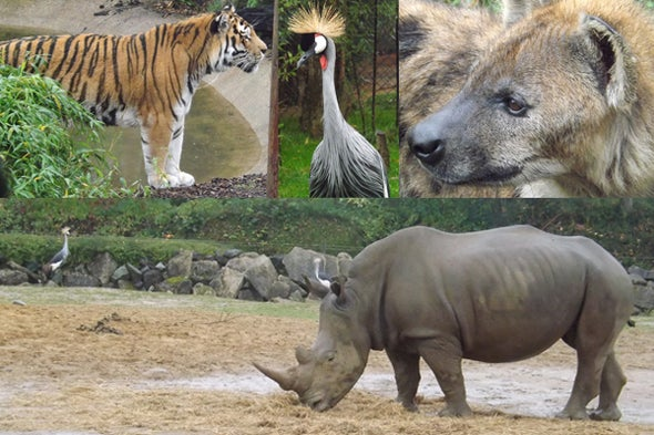 Tet Zoo Reviews Zoos: Colchester Zoo