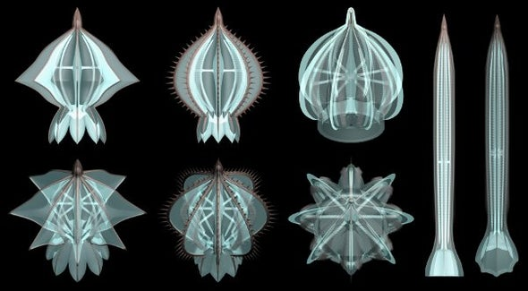 Shimmering, Squishy Comb Jellies Once Had Skeletons