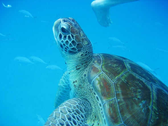 Should Tourists Swim with Endangered Sea Turtles?