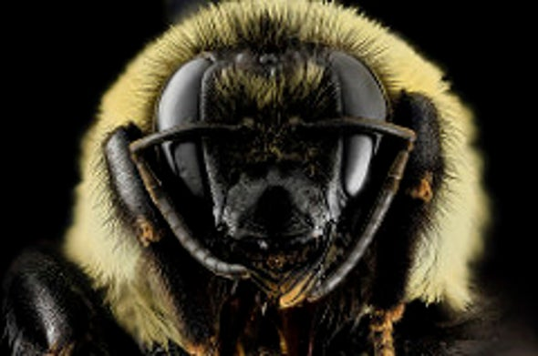 Bumblebees Learn Two Things at Once