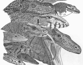 Monitor musings, varanid variables, goannasaurian goings-on… it's about monitor lizards