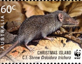 Holiday Species Snapshot: Christmas Island Shrew