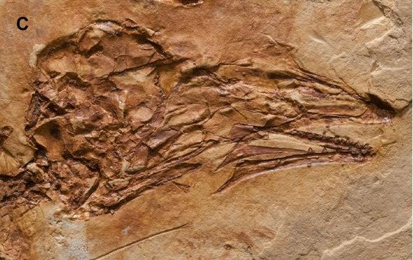 Paleo Profile: The Beautiful Bird