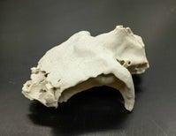 Fossil Rewrites Ratfish History