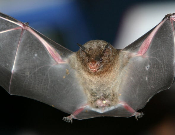 Brazil's Bats to Face Climate Change Squeeze