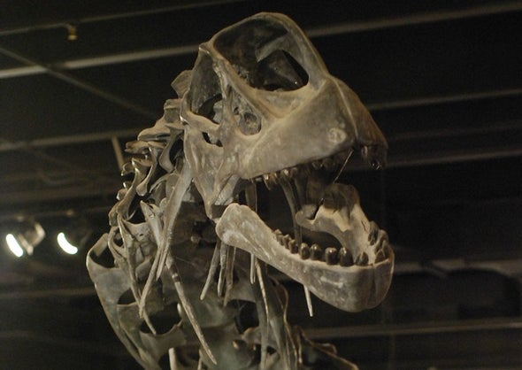Looking Camarasaurus in the Mouth